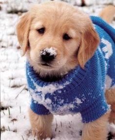Awww. Stay warm. Spoil your dog with doggyloot!
