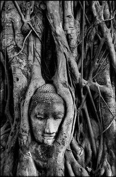 buddha head, ayutthaya thailand, central thailand, trees, tree root, statu, place, photographi