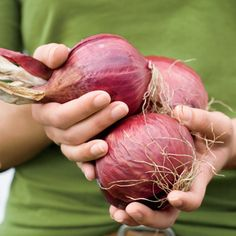 Long lasting food: Onions