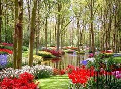 colorful flowers, heaven, dream, forest, backyard, place, pond, flowers garden, british columbia