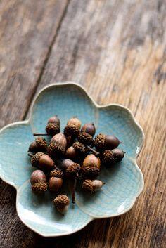 acorns ..