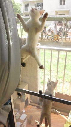 猫と網戸 cats and window screen