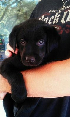 Black Lab puppy:) I want another one