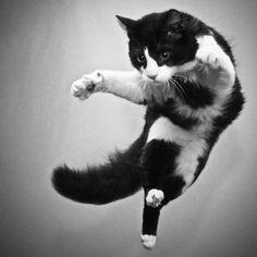 The art of cat