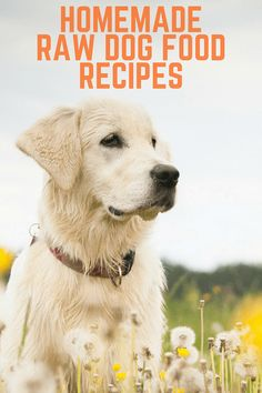 DIY raw dog food! Ea