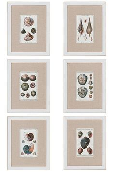 Sea Shells Wall Art - Set of 6. HomeDecorators.com