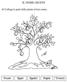 parti dell'albero classe seconda.jpg
