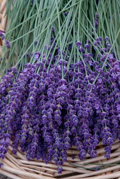 lavender how sweet the smell