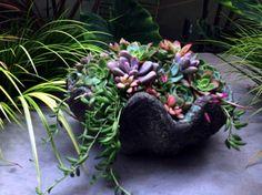 Succulents Newport Beach