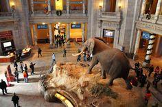 Smithsonian National Museum of Natural History - Washington DC