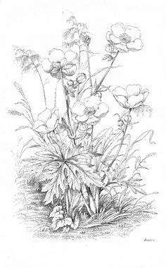 FREE - botanical floral