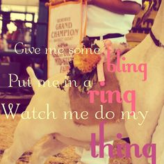 "The best stock show motto yet.  ""Get me some bling, put me in a ring, watch me do my thing."" <3"