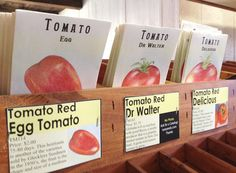 tomato seeds! non GMO from comstock, ferre & co