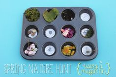 {Muffin Tin} Spring Nature Hunt - Mama. Papa. Bubba.