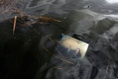 A photograph floats just below the surface of a flooded street in the aftermath of superstorm Sandy on Oct. 30 in Massapequa, N.Y. (Jason DeCrow/Associated Press)