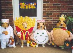 Trick or treat dogs - nearly fell off my chair!
