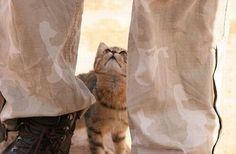 kitty & soldier