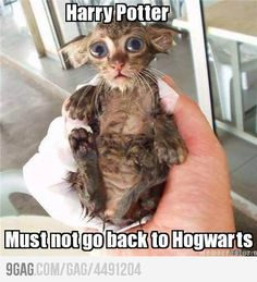 ugly cat=house elf?