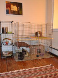 How to build a bunny condo