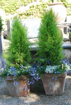 At A Glance: Enjoying The Spring Season | Dirt Simple.  Lemon cypress trees in pots
