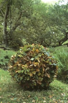 Andy Goldsworthy // Green Home