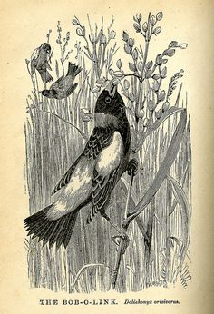 from Cecil's Books of Natural History by Selim H. Peabody, 1880.