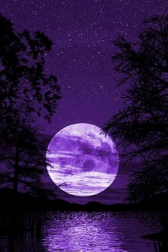 iphone wallpaper - purple night sky with white full moon and black trees