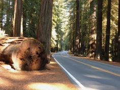 The Redwood Forest - in my mind it's still hard to imagine trees being THAT big - I have to see for myself!!