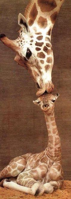 Kisses #budgettravel #travel #animal #cute