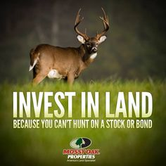 Invest in land.