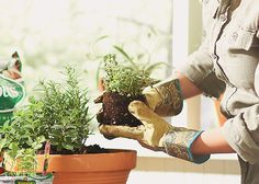 Too bad this isn't scratch and sniff! It's easy to plant herbs in containers to make a scented garden. Try rosemary, basil, lavender, oregano, and sage. Or treat your nose to all the delicious mint-scents, including chocolate, orange, peppermint and more.