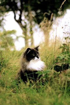 in the long grasses, as it should be