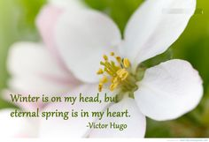 Winter is on my head, but eternal spring is in my heart. #SpringQuotes