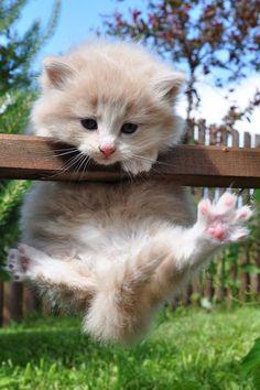 Entrenamiento matutino para guardar la línea... ¡operación bikini! ;) #verano #cats #gatos #divertidos #funny 1300 Pet Insurance for Dogs and Cats in Australia - http://www.kangabulletin.com/online-shopping-in-australia/protect-your-furry-four-legged-friends-with-1300-pet-insurance-australia/ #pet #insurance #australia #price pet insurance woolworths and pet insurance choice