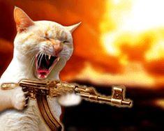 Cat Shooting a Machine Gun - Click to play