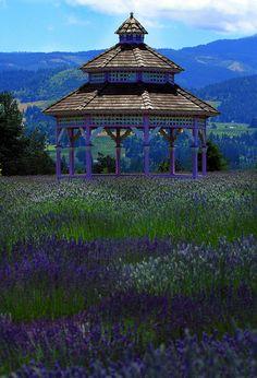 Lavender gazebo, Hood River, Oregon
