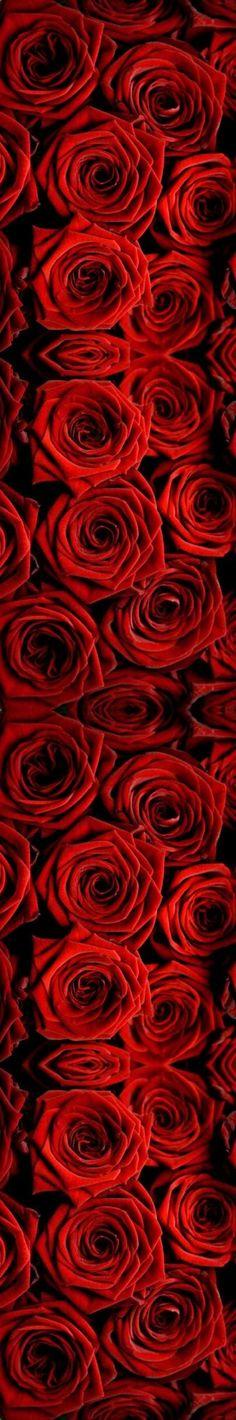 rojo red energía chakras