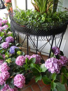 amaz flower, plant stands, beauti hydrangea, plants, iii garden, planters, floral, porch garden, hydrangeas