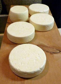 goats milk cheese, how to make goat cheese, homemade goat yogurt, goat milk cheese