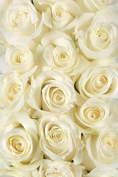 Milk colored roses.