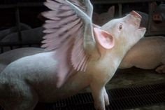 WATCH: The Most Shockingly Beautiful Video About Factory Farming