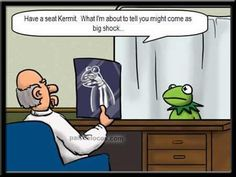 funny animals, twisted humor, truth hurts, funni stuff, laugh, joke, funny quotes, the muppets, physical therapy