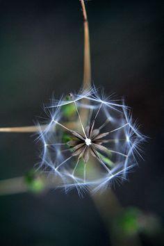 geometry mathematics in nature