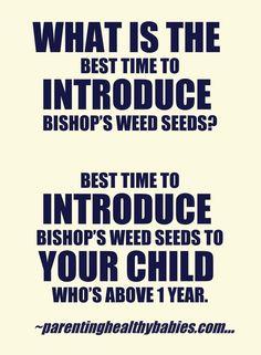 Health Benefits Of Bishop's Weed Or Ajwain Seeds For Children - ParentingHealthyBabies.com