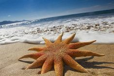 18 Mind blowing STARFISH PHOTOS and FACTS
