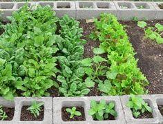 raised gardens, growing herbs, raised bed gardens, garden walls, block garden