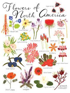 flowers of North America #flowers