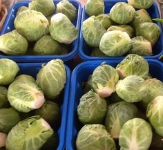 First brussels sprouts from Fong Vang 8/4/13