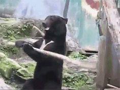 Kung fu bear!
