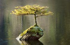 tree-growing-on-a-log